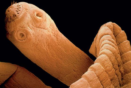 Los modos de la definición de los parásitos