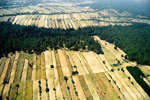 bosques_sobrevuelo_malinche-gs02
