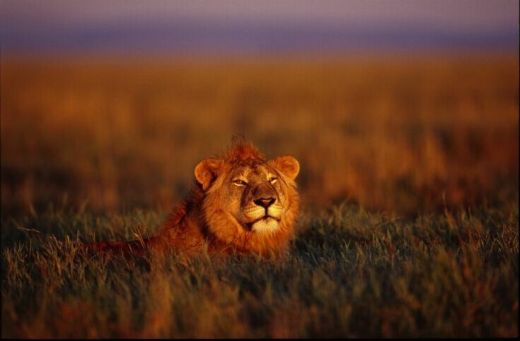 tanzania-parque-nacional-del-serengueti-l3