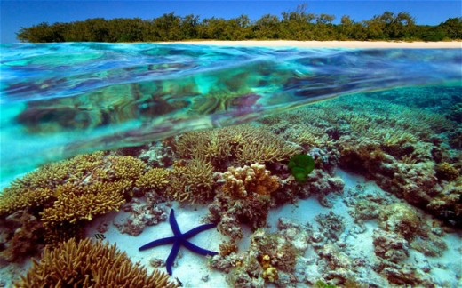 greatBarrierReef_2434464b